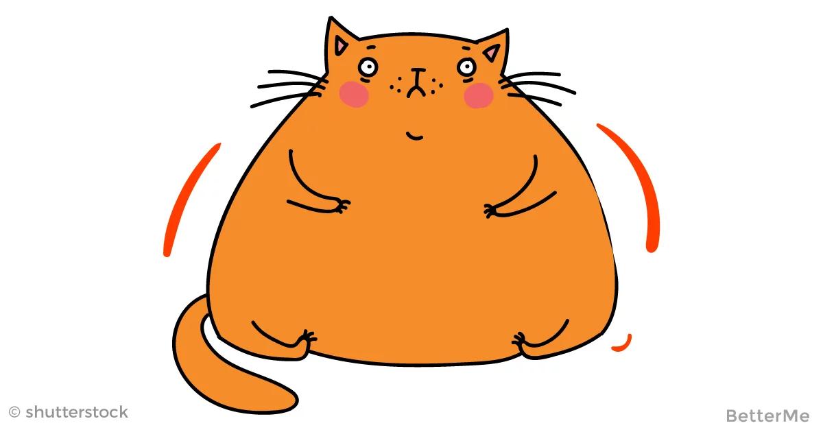 Картинка толстая кошка сидит на коврике призме луч