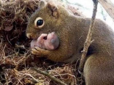 Increíble video capta a mamá ardilla salvando la vida de sus bebés de una muerte segura