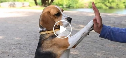 Hindi sila nakakalimot! Science proves that dogs remember what you do them