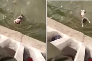 This heroic taxi driver jumps off bridge to save baby thrown by her own heartless mother. Watch the heart-stopping moment.