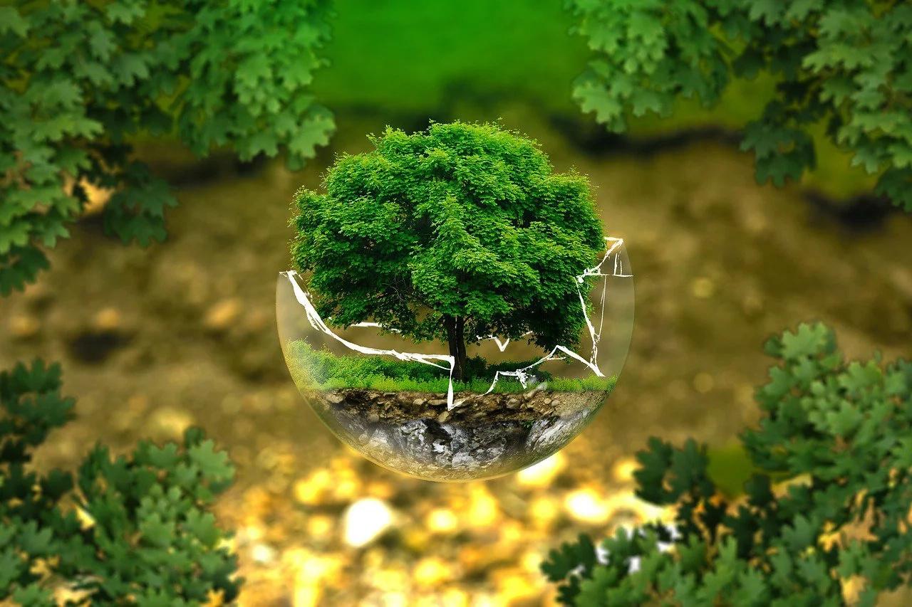 Iniciativas que le apuestan al medio ambiente
