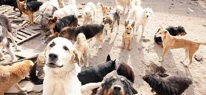 Terrible exterminio a más 50 perros con un potente herbicida
