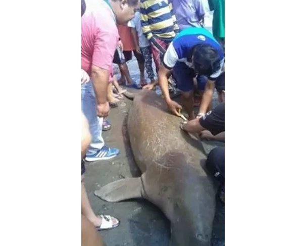 Sea cow was surrounded by people, but they couldn't help it