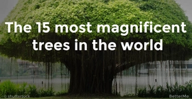 The 15 most magnificent trees in the world