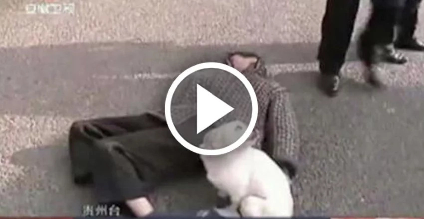 Dog guards owner who passed out in the middle of the street