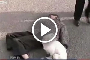 Brave dog guards owner who passed out in the middle of the street in China