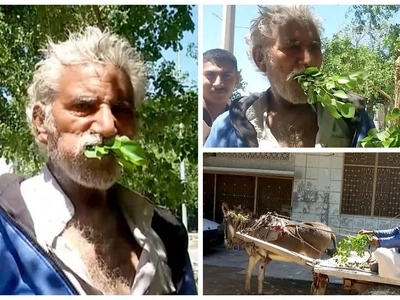 Man, 50, is addicted to eating TREES after resorting to eating leaves when he was poor (photos)