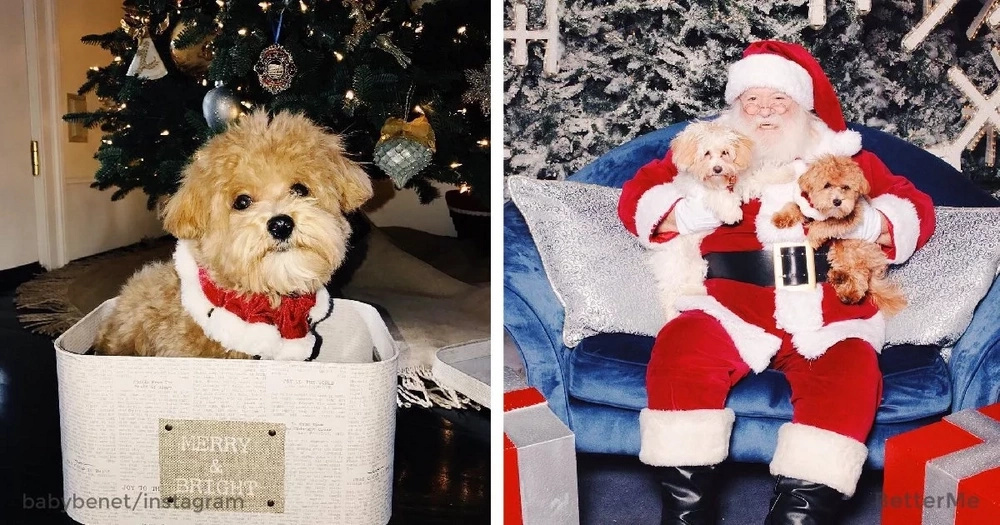 The top-10 Christmas dogs on Instagram are positively adorable