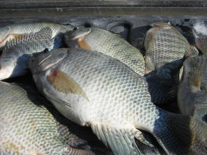 Fish Farming in Kenya Business Plan and Tips