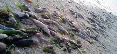China dumps chemicals, kills fish around Kalayaan Island to drive away Filipino fishermen