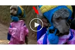 The owner of this dog is extremely CRUEL to it. Watch what he makes it to do in this tearful video...
