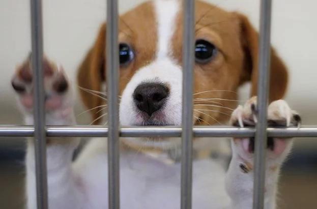 Crean página web para adoptar mascotas en Colombia