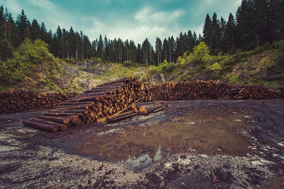 ¿Deforestación cero para el año 2020?