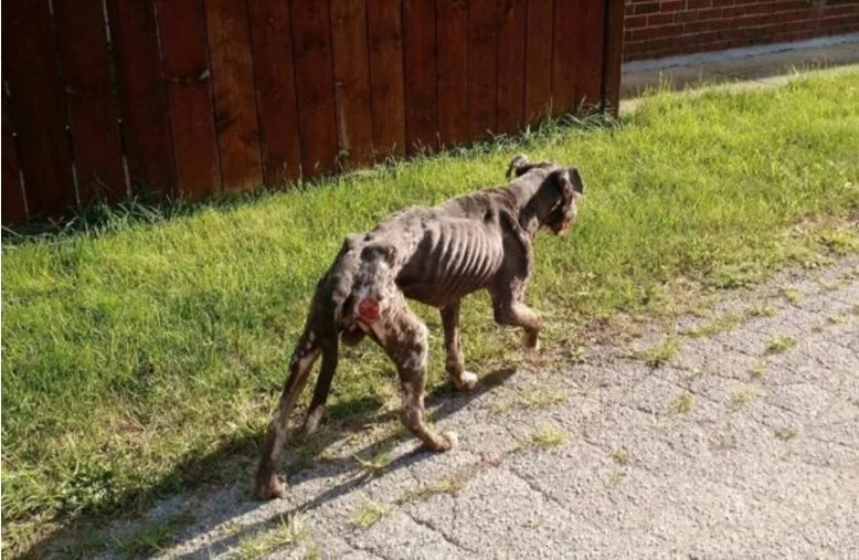Animal foundation rescues dog with severe case of abuse