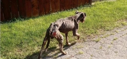 PHOTOS: This dog has the worst case of abuse