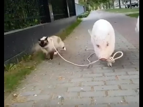 Why are they walking each other?