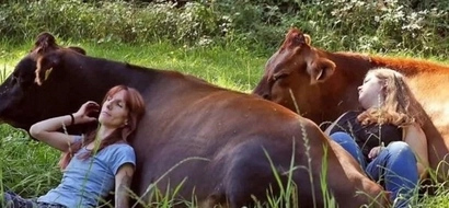 Snuggling with cows is a new STRESS RELIEF technique