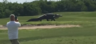 Alligator size of DINOSAUR causes panic during casual golf match (photos, video)