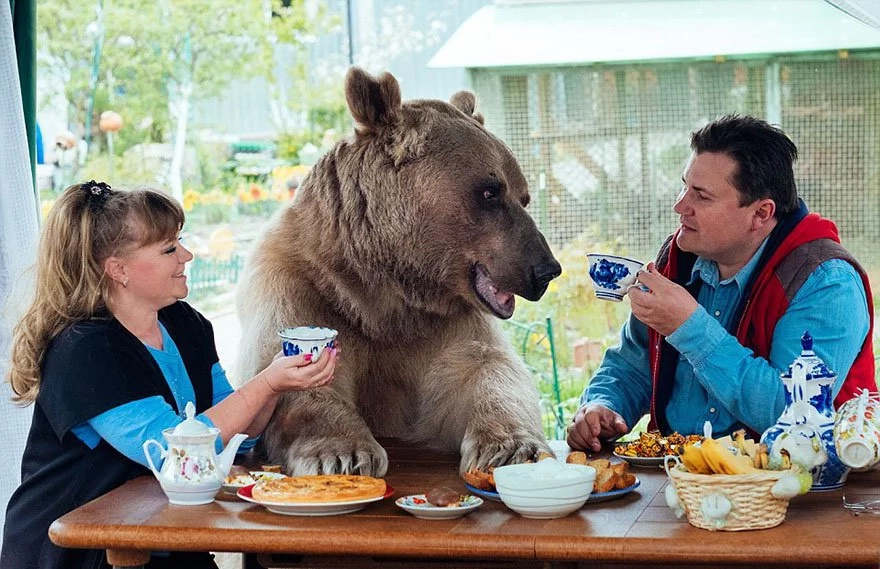 Wild animal as a pet? Couple adopts bear in Russia