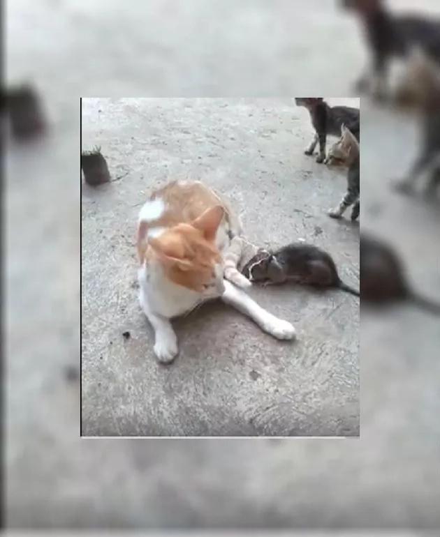 Este gato protagonizó una escena bastante curiosa