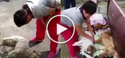 Woman from China hysterically cries while watching her poisoned dogs' agonizing death