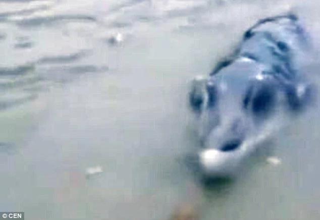 Fishermen film mutant crocodile-dolphine-whale creature