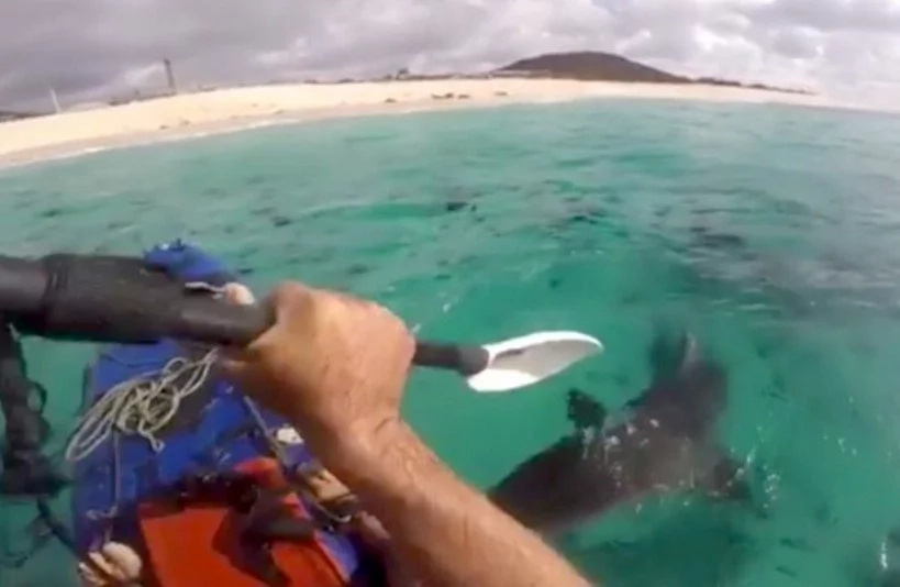 Aggressive Sharks Are Following This Diver's Kayak - Watch What He Does