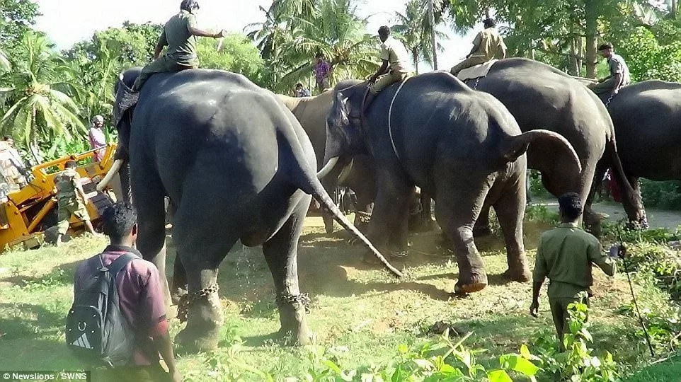 Rogue elephant TRAMPLES and kills nine people, is sent to REHAB (photos, video)