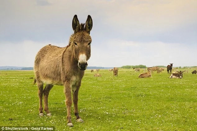 Donkey chomps £260k sports auto  mistaking it for a giant carrot