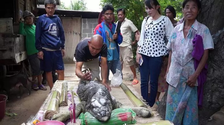 Animal Hybrid Of Bull And Crocodile Baffles Locals In Thailand