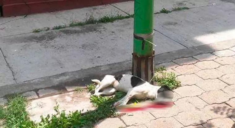 Mujer asesinó a su perro y no ha sido capturada