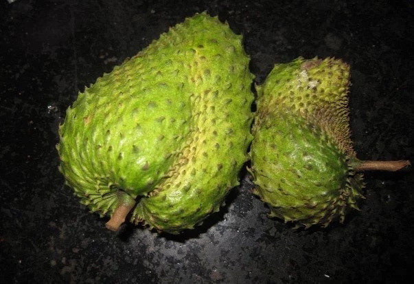 The leaves of soursop are 1.000 times stronger at killing cancer cells than chemotherapy!