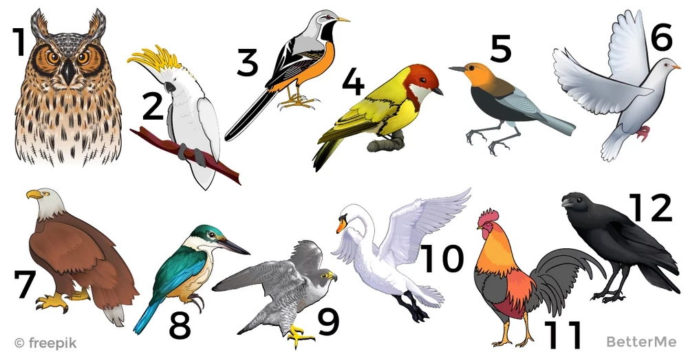 What does your birth month bird reveal about your personality