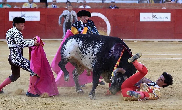 Spanish bullfighter dies in front of his wife