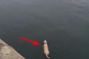 Perrito nada todos los días para ver a su mejor amigo delfín