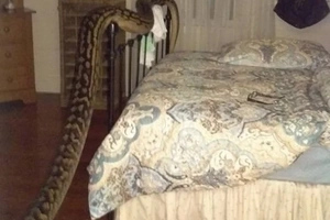She Wakes Up To See 16 FOOT PYTHON Surprise