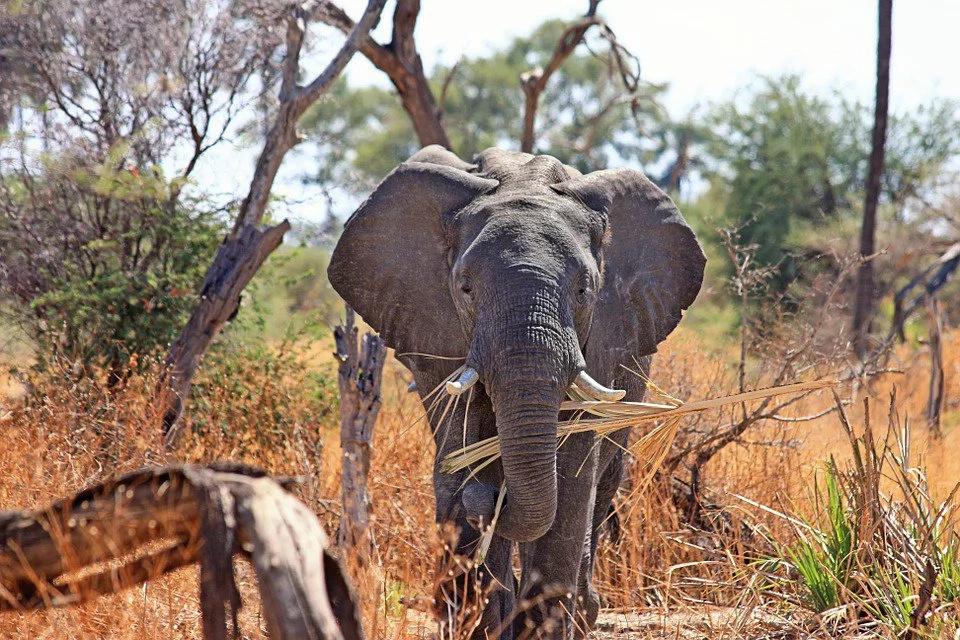 Papel hecho con excrementos de elefante