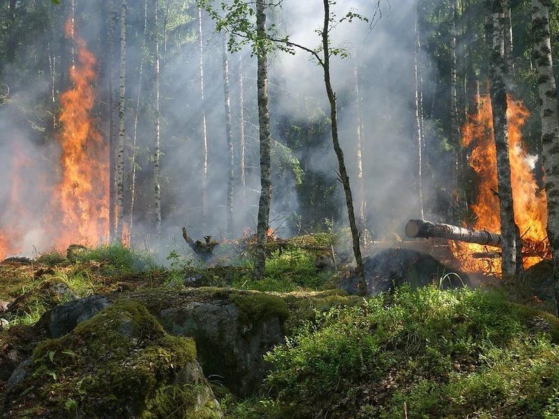 El Amazonas está bajo amenaza de incendio forestal