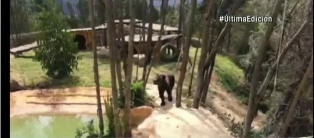 A estos osos en cautiverio les sucedió algo increíble