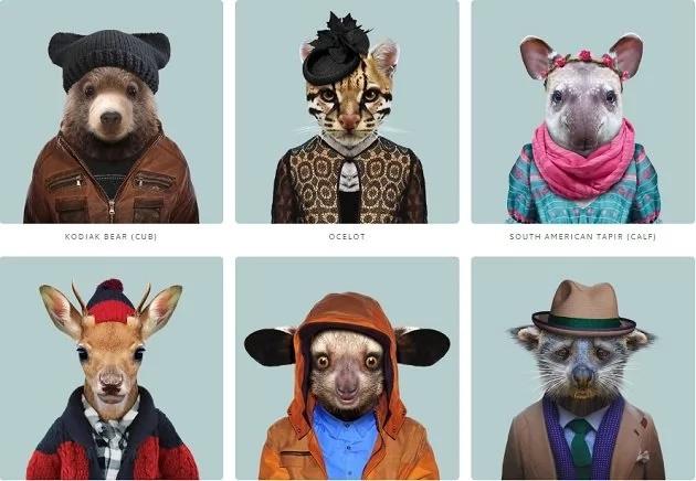 Estos animales vestidos de moda se ven totalmente geniales