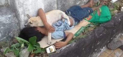 Portrait of pure love: the loyal dog and its poor master
