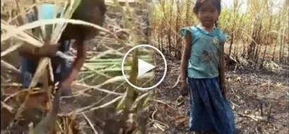 Video of 6-year-old girl toiling in sugarcane field despite scorching heat of the sun breaks hearts of netizens