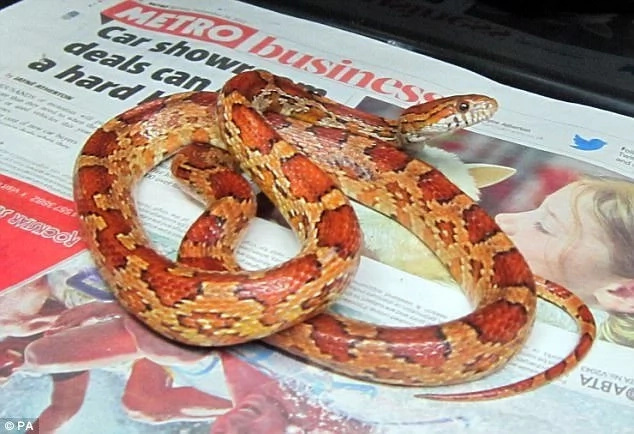 One of the snakes they found. Photo: Yorkshire Evening Post