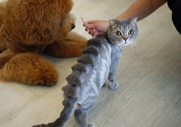 Incredible Taiwanese Salon Performs Cute Haircuts On Pets