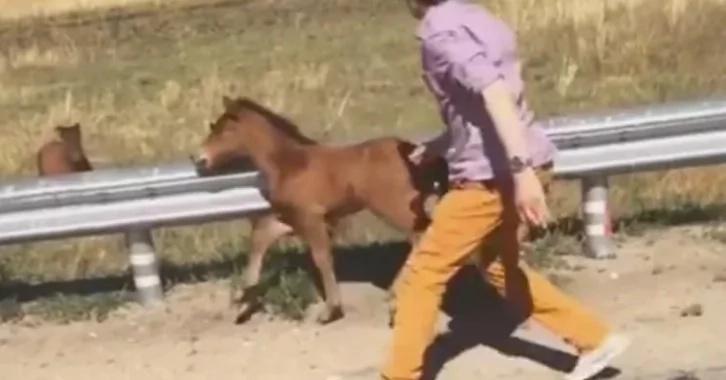 Mira cuando este hombre rescata a un caballo bebé