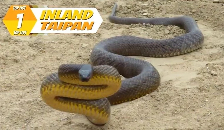 Top 10 Of The World's Most Poisonous Snakes
