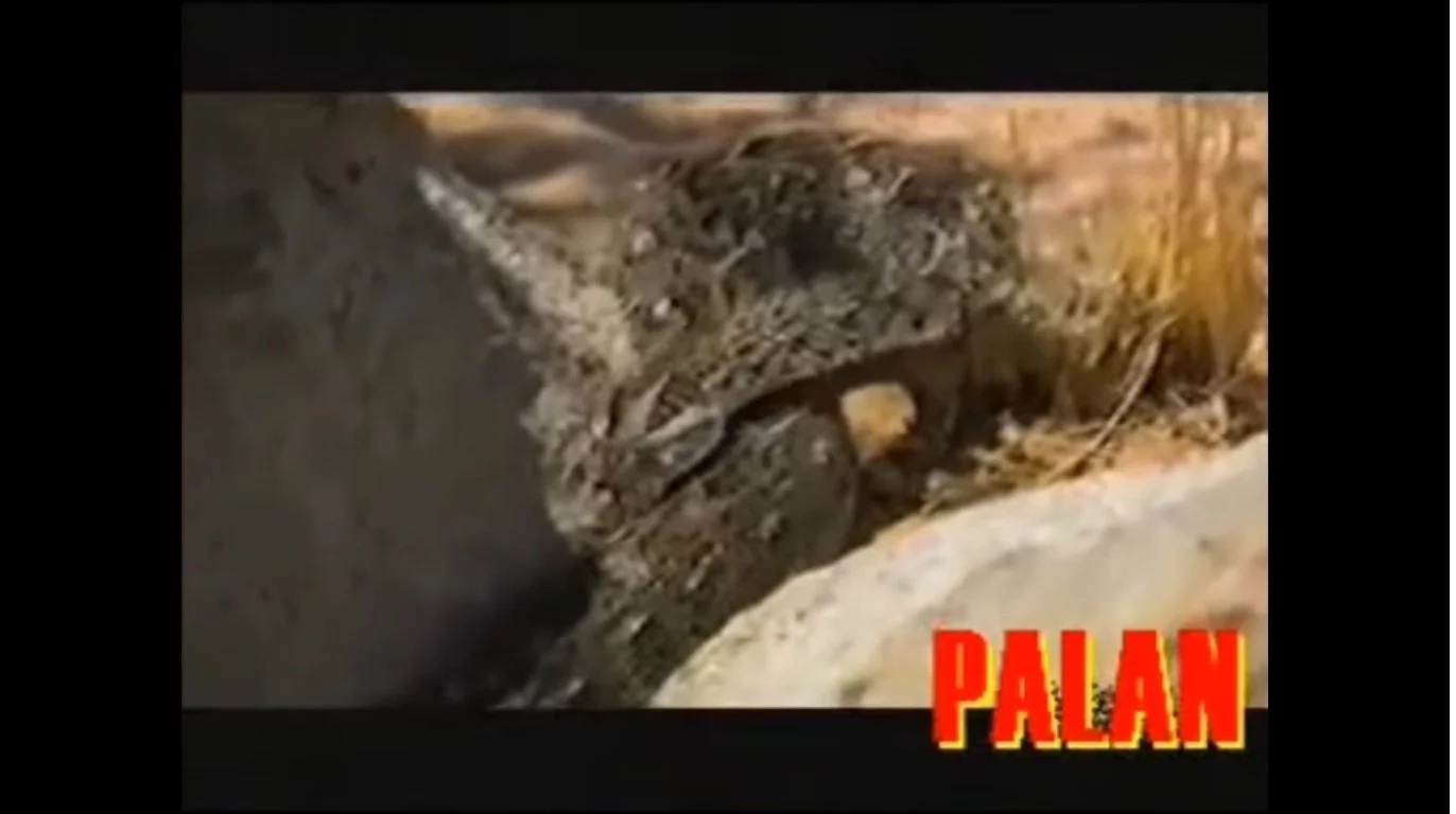 Shocking Video Of Bear Grylls Eating Raw Snake
