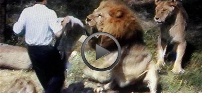 WATCH: These 10 clips of violent LIONS attacking humans will terrify you!