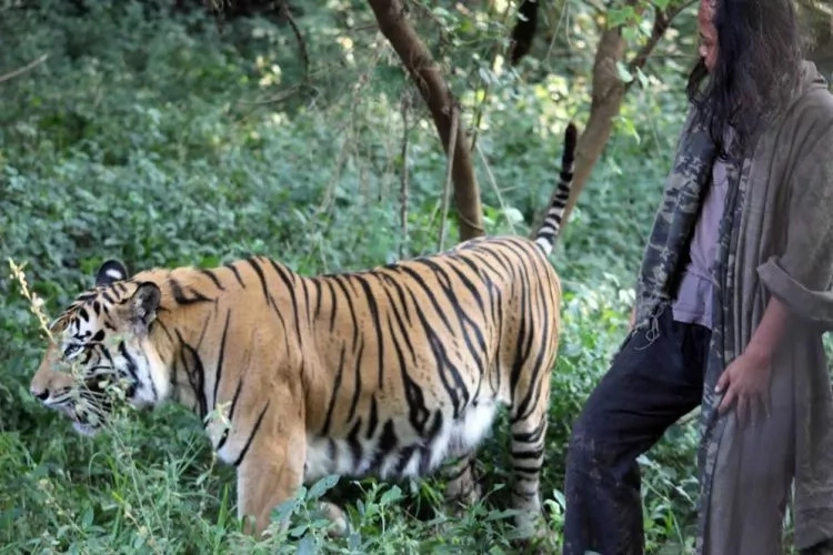 Teen, 25, has been friends with TIGER for 10 years, even sleeps in same cage with big cat (photos)