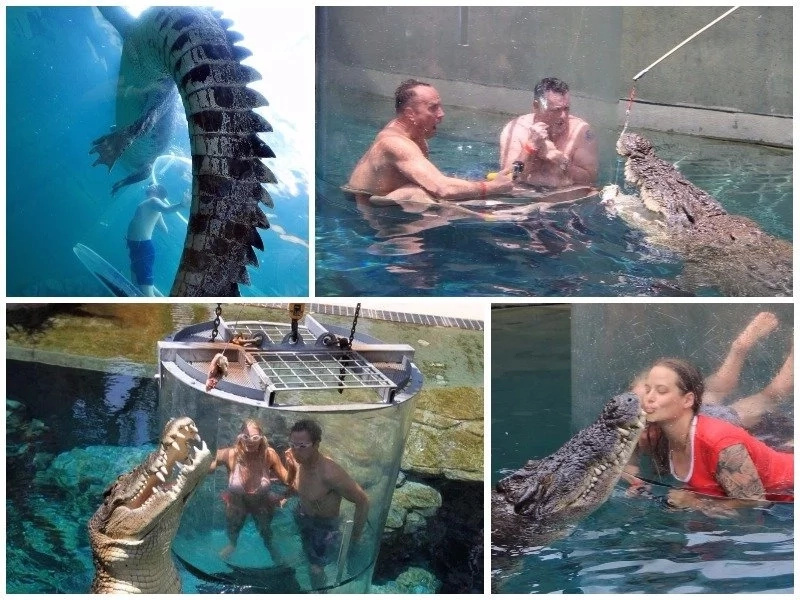 Cage of death! Adrenaline junkies flock to croc cove in Darwin City to dive with 4.8 meter beasts